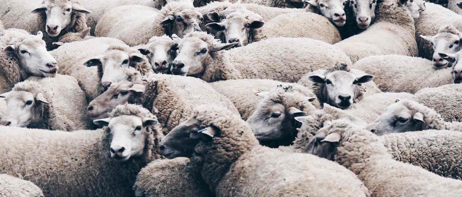 Psalm 23 | God als Herder