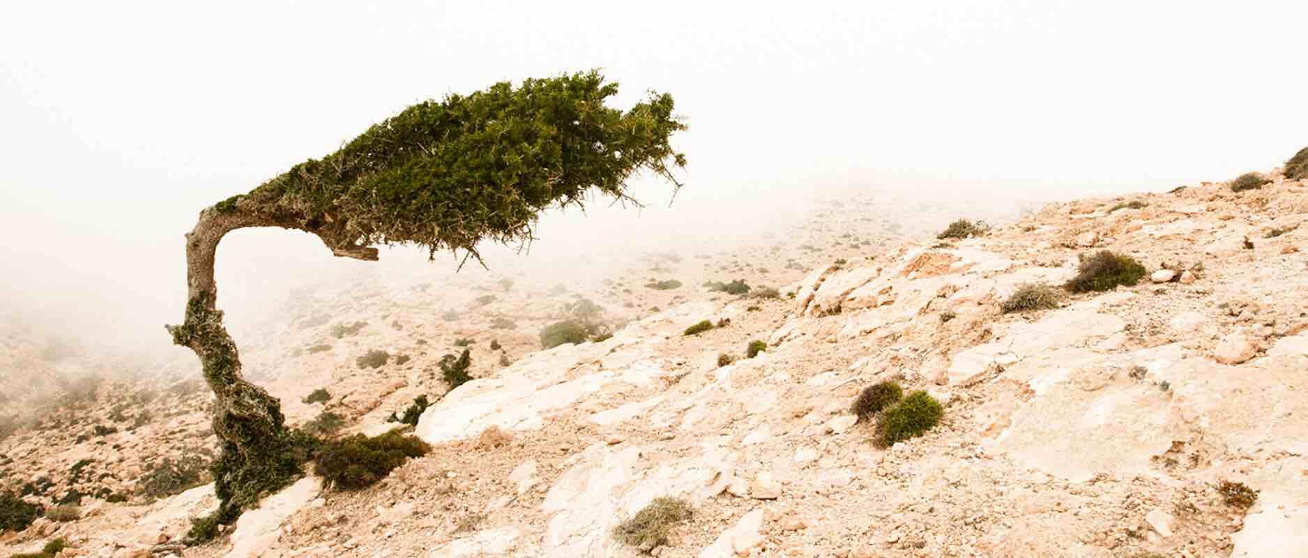 Wat staat er het bijbelboek Genesis?