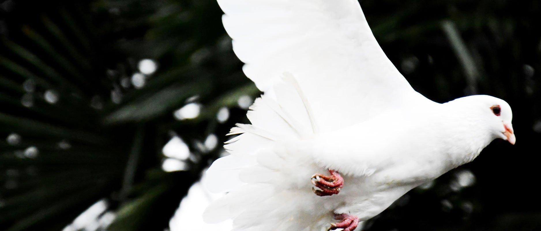 Zonde tegen de heilige Geest