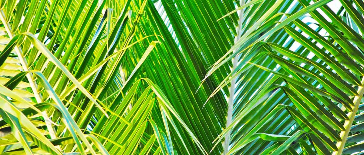 Wat is de betekenis van Palmpasen?